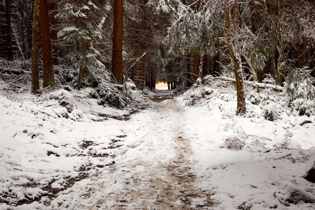 Brocken Nationalpark Harz Waldweg