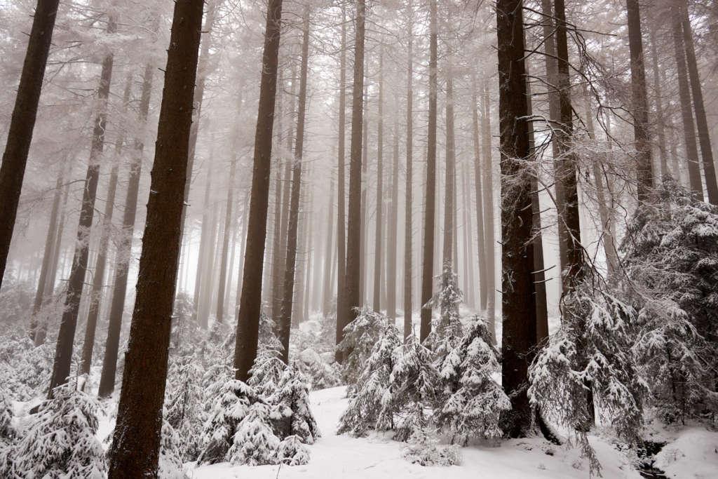 Brocken Nationalpark Harz Wald